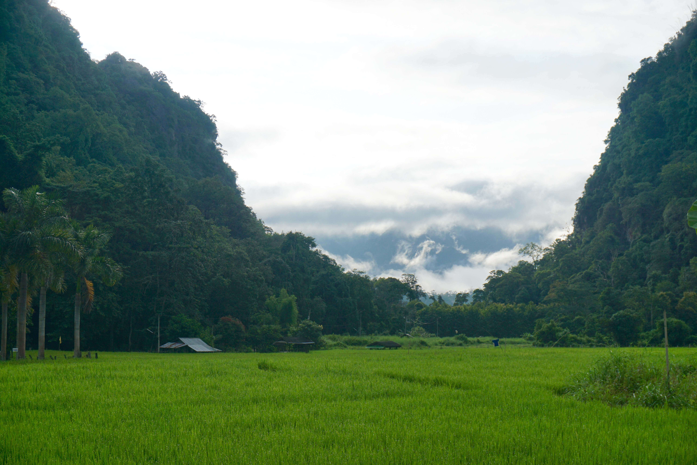 Rice field between two cliffs