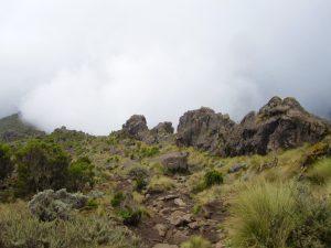 Moorland rocky landscape