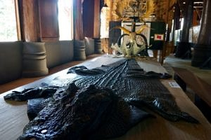crocodile skin on a table