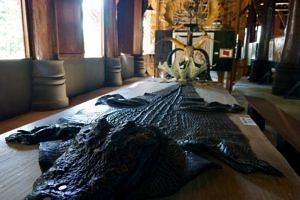 crocodile skin on a table