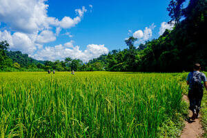 Walk through the rice fields on the way out