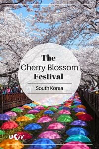 South Korea's Cherry Blossom festival is one of the best ways to spend a spring day. Photographers and casual viewers from around the world visit each year.
