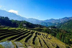 Rice terraces in sapa Vietnam