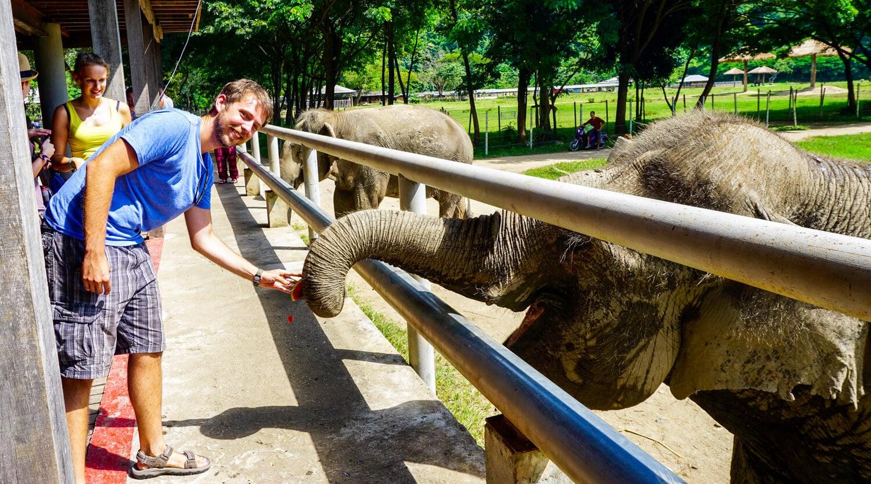 Ron feeding the elephants yummy treats