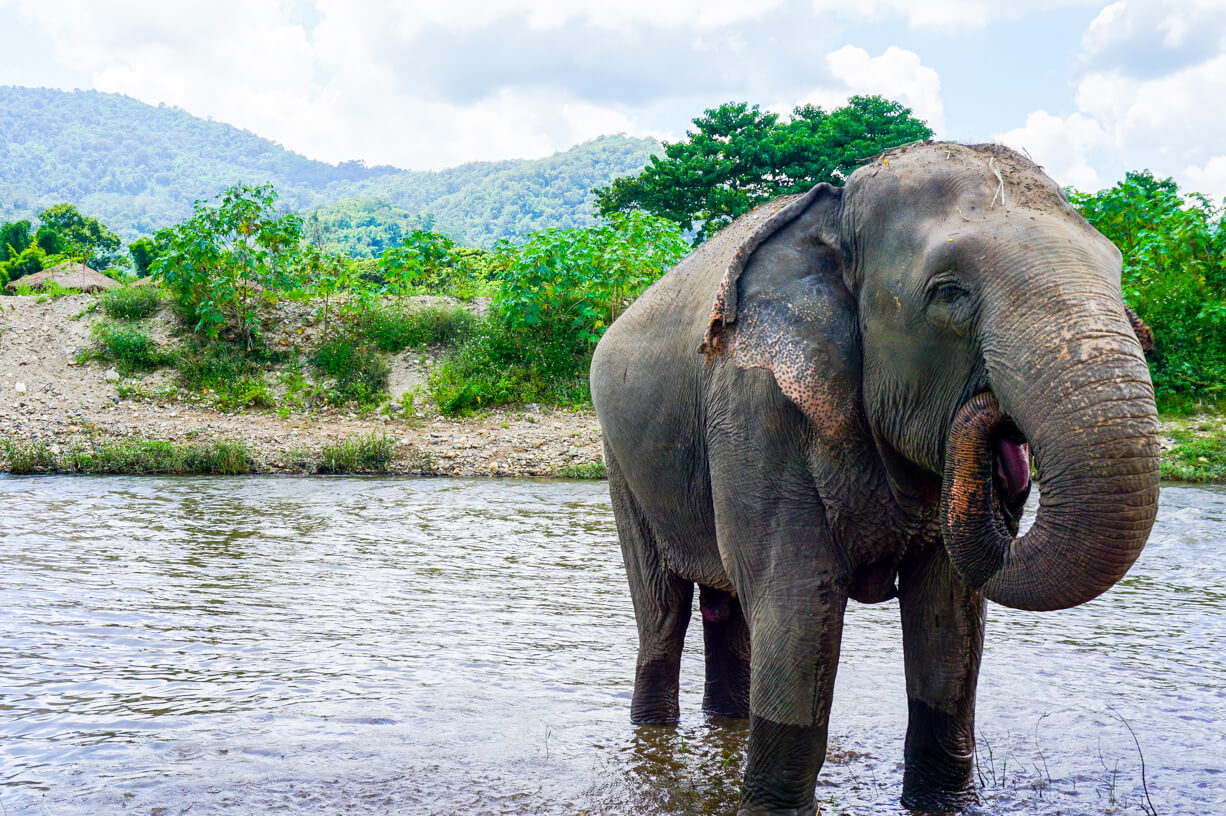 The Elephant Nature Park  Thailand. How To Get Rid Of Moldy Smell In Basement. Does The White House Have A Basement. Cost To Build Basement. Rainy Day Basement Systems. Diy Basement Remodeling Ideas. Sound Proofing Basement Ceiling. Best Carpet For Basement. Cheap Basement Bar