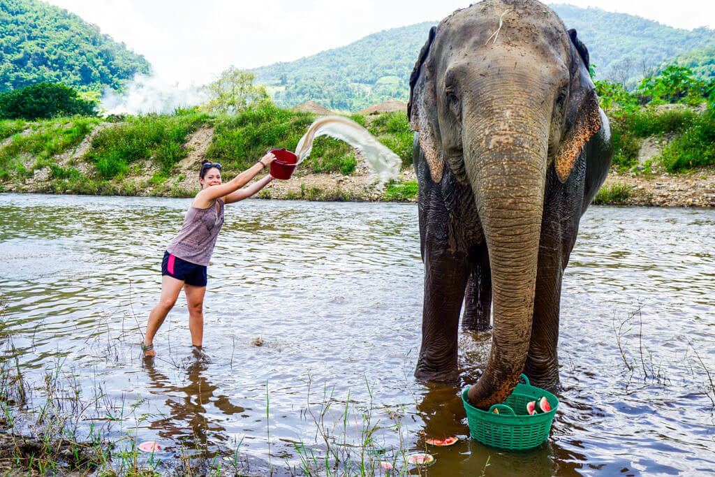 Girl Bathing an Elephant in the River