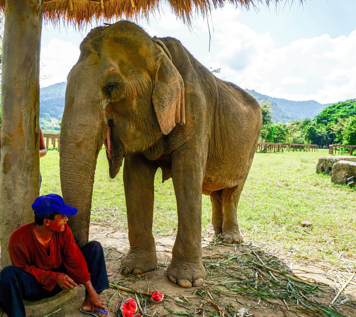 An elephant at The Elephant Nature Park laughing with its mahout