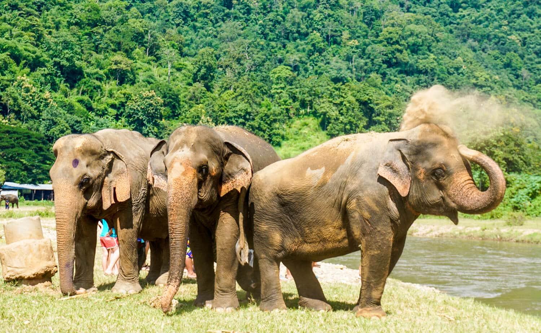 Three elephants having fun in the dirt