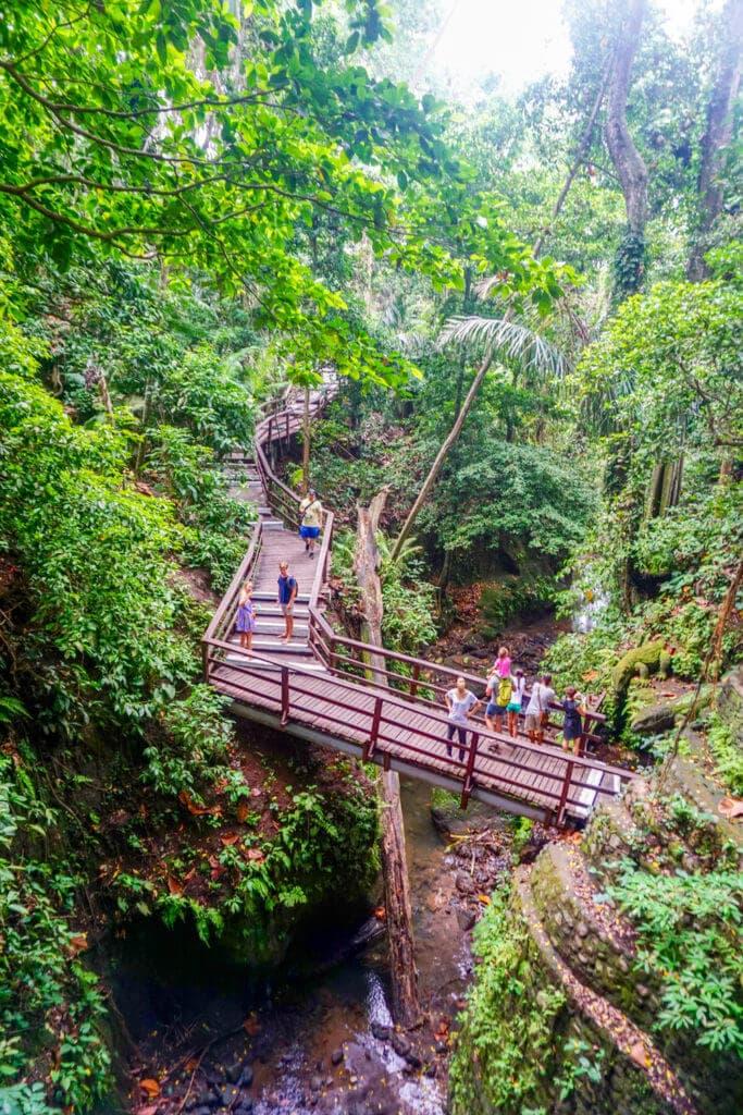 Valley of Ubud Monkey Forest