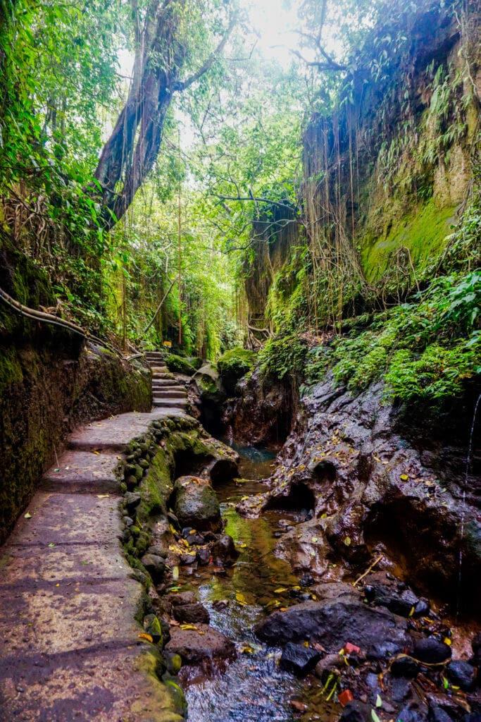 Stream running through Ubud Monkey Forest