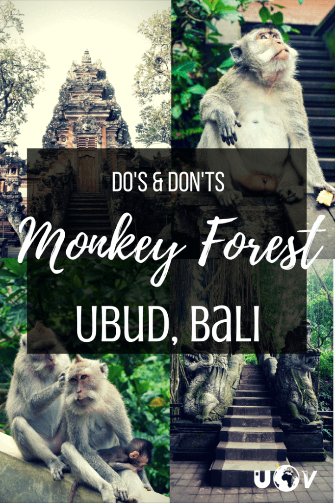 Quick list of what to do and what not to do when visiting the Balinese Long Tail Monkeys at the Sacred Monkey Forest Sanctuary in Ubud, Bali.